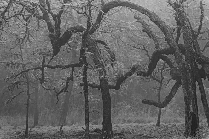Dichte Mist in een bos van verschillende gevormde bomen stock fotografie