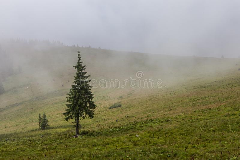 Dichte mist over bergweide en bos stock afbeelding