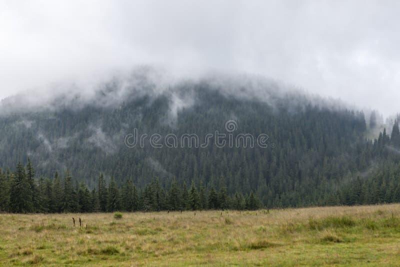 Dichte mist over bergweide en bos royalty-vrije stock foto's