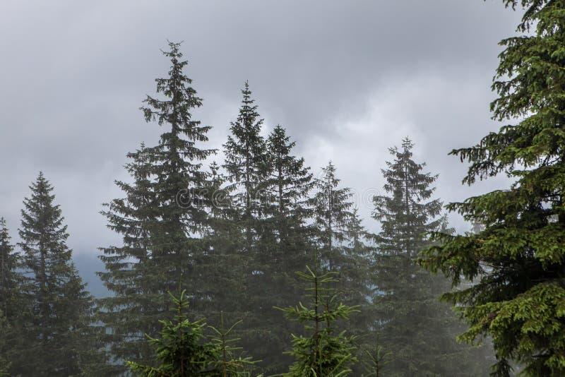 Dichte mist over bergweide en bos royalty-vrije stock afbeeldingen
