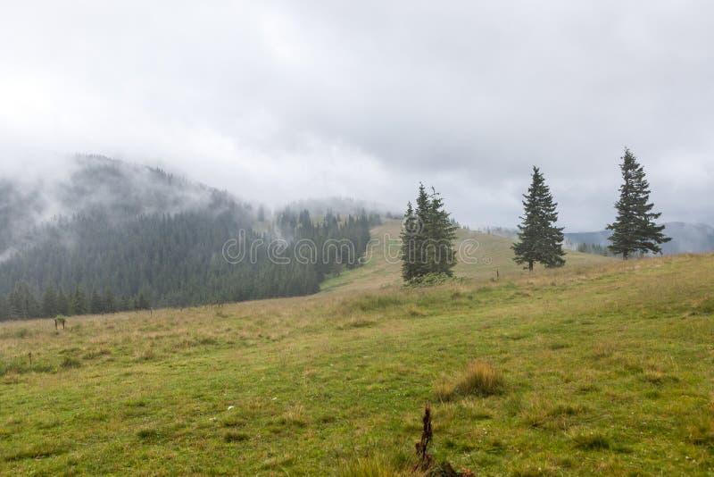 Dichte mist over bergweide en bos stock foto