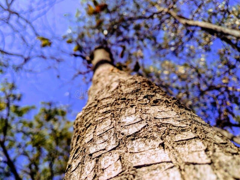 Dichte omhooggaand van boom stock afbeeldingen