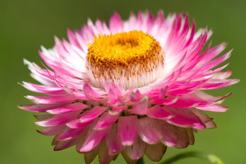 Dichte omhooggaand van de bloem royalty-vrije stock afbeelding