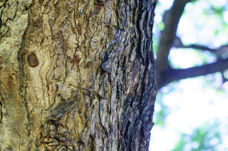 Dichte omhooggaand van de boomschors van saman boom stock afbeelding