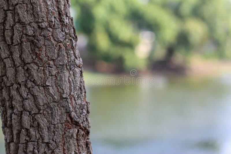 Dichte omhooggaand van de boomtextuur bij het park royalty-vrije stock afbeeldingen