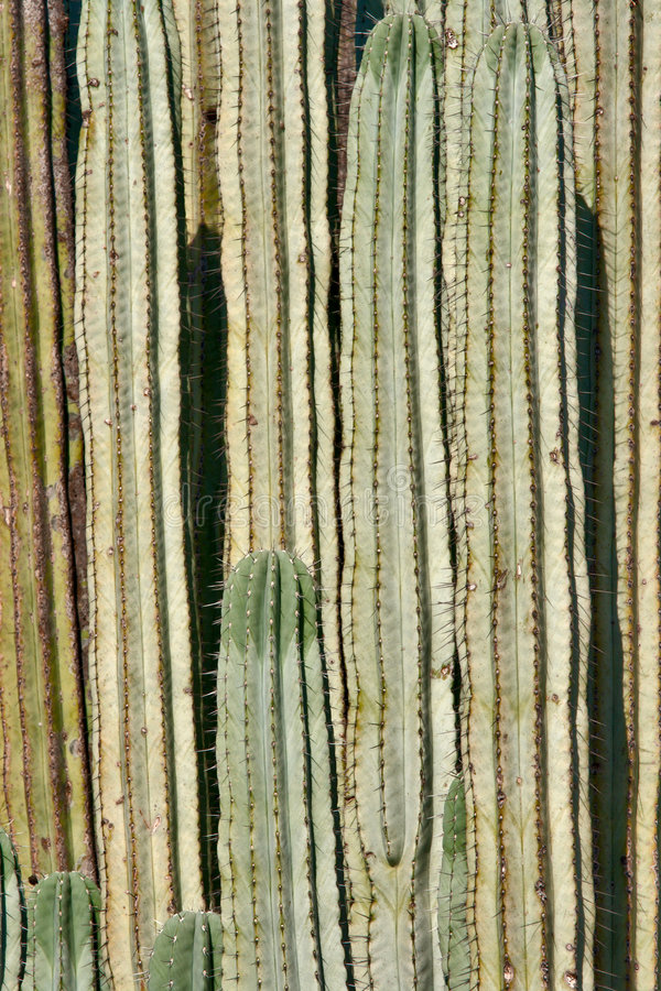 Dichte omhooggaand van de cactus royalty-vrije stock foto's