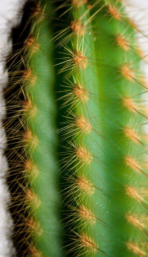 Dichte omhooggaand van de cactus stock fotografie