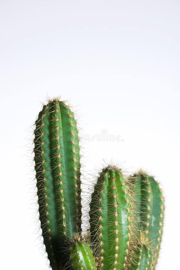 Dichte omhooggaand van de cactus stock foto's