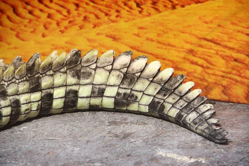 Dichte omhooggaand van de krokodilstaart royalty-vrije stock foto