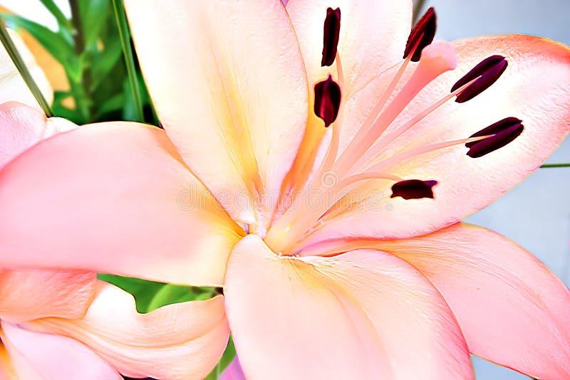 Dichte omhooggaand van de leliebloem met lange gloeidraden stock foto's