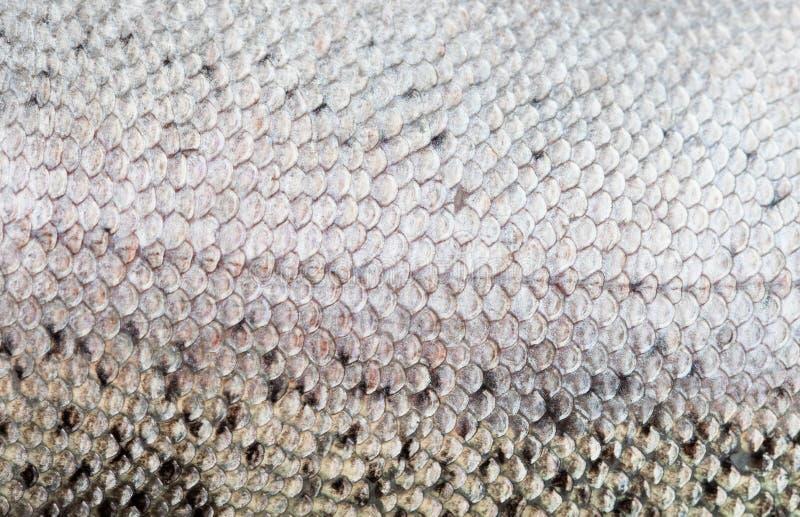Dichte omhooggaand van de vissenschaal royalty-vrije stock fotografie