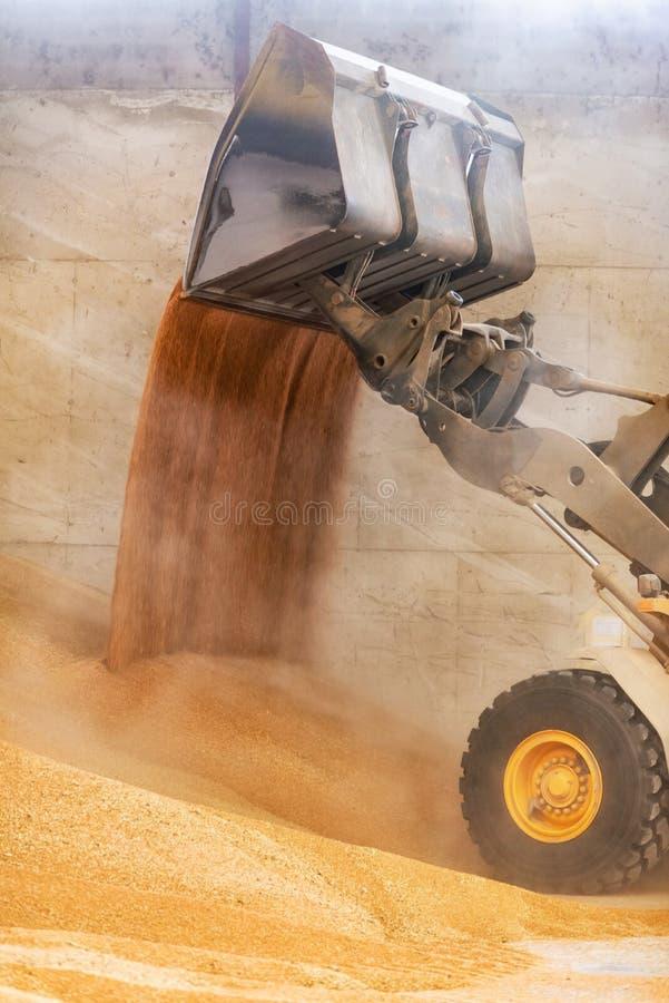 Dichte omhooggaand van de wiellader, het zand van de graafwerktuiglading bij bouwwerf royalty-vrije stock afbeeldingen