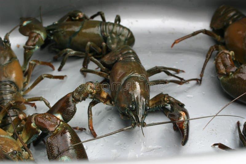 Dichte omhooggaand van een gevangen krab royalty-vrije stock foto's