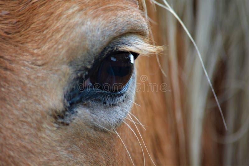 Dichte omhooggaand van een mooi paardenoog stock afbeelding