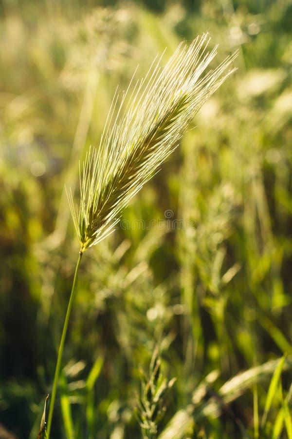 Dichte omhooggaand van het gras stock afbeeldingen