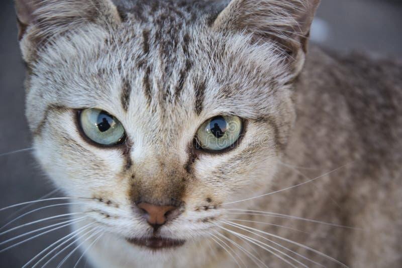 Dichte omhooggaand van het kattenportret stock fotografie