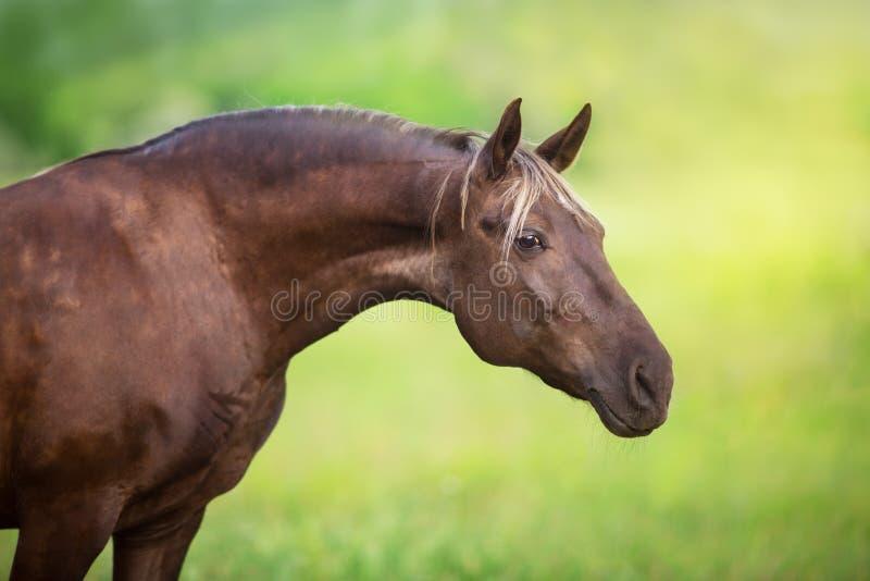 Dichte omhooggaand van het paardportret royalty-vrije stock afbeelding