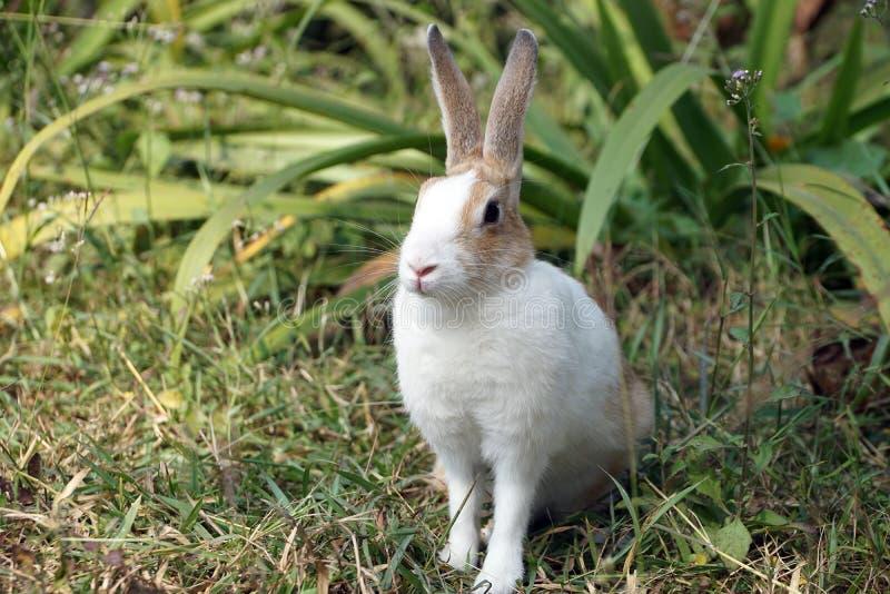 Dichte omhooggaand van leuk weinig konijntje, konijnzitting op groen gras royalty-vrije stock afbeelding