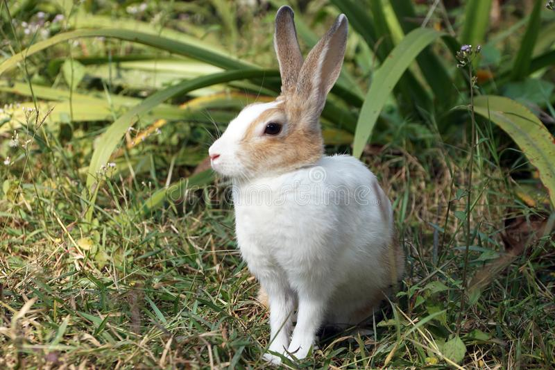 Dichte omhooggaand van leuk weinig konijntje, konijnzitting op groen gras royalty-vrije stock foto's