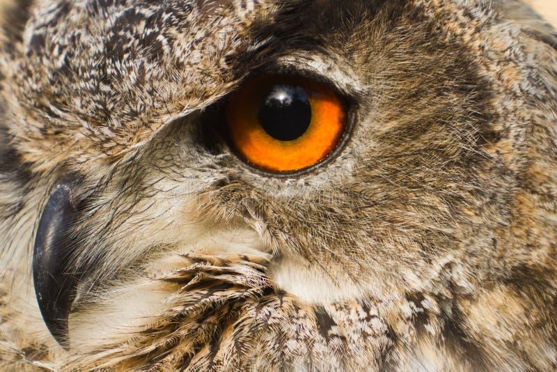 Dichte omhooggaande de adelaarsuil van het oog stock foto's