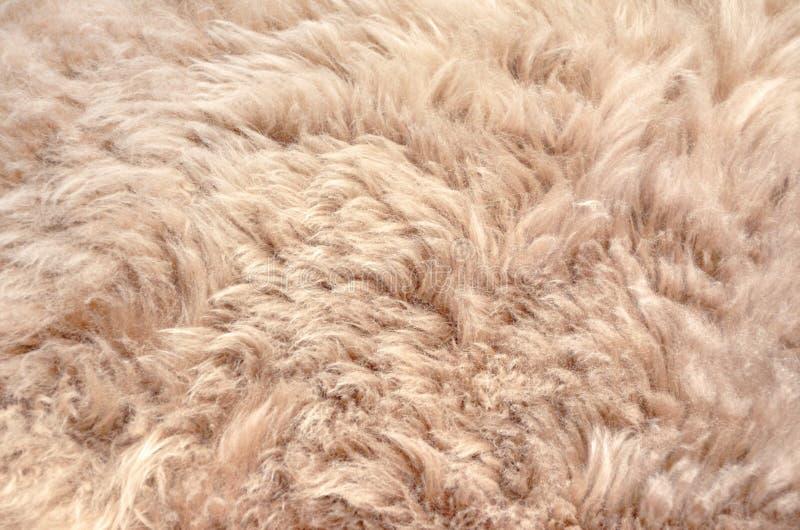 Dichte omhooggaande de textuurachtergrond van het schapenbont royalty-vrije stock afbeeldingen