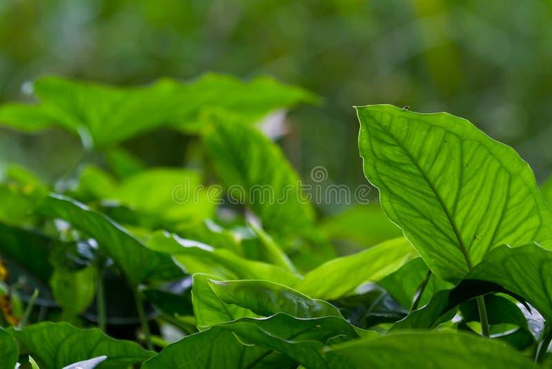 Dichte vegetatie stock afbeeldingen