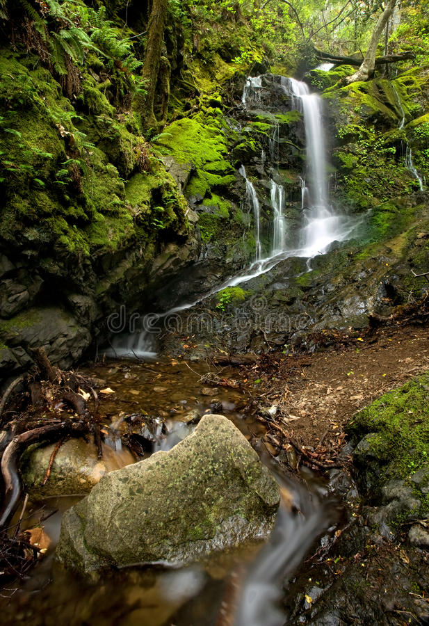 Dichter üppiger Wald und Wasserfall stockbilder