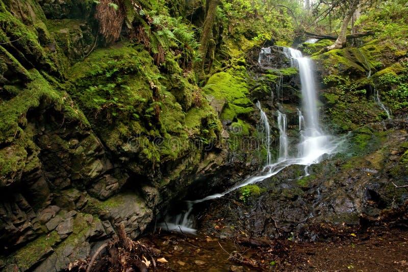 Dichter üppiger Wald und Wasserfall lizenzfreie stockfotografie