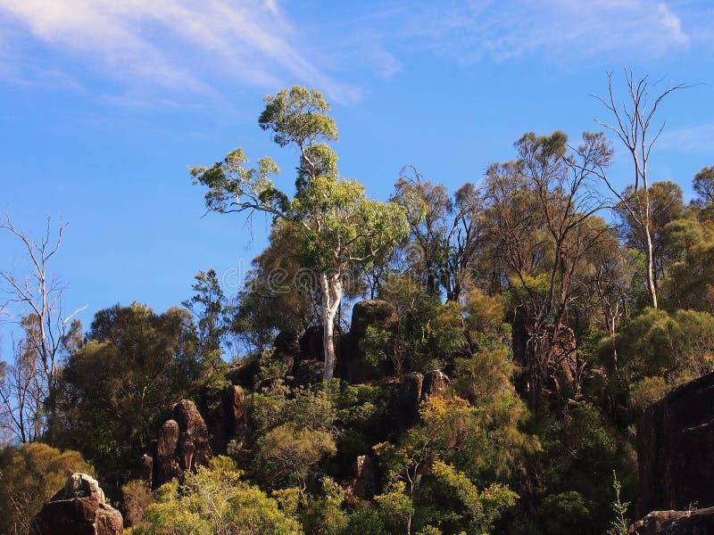 Dichter Bush, Tasmanien stockfoto