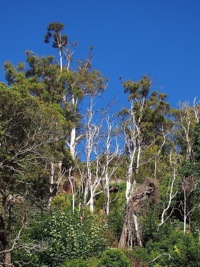 Dichter Bush, Tasmanien stockfotos