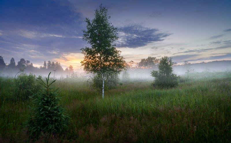 dichter Morgennebel im Sommerwalddichten Morgennebel im Wald in Teich Morgenlandschaft im dichten Nebel des starken Nebels des So lizenzfreies stockfoto