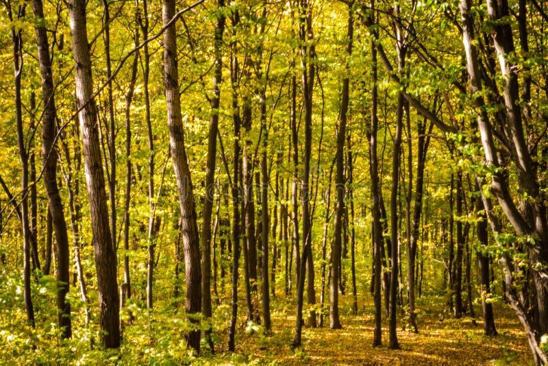 Dichter Wald lizenzfreie stockbilder