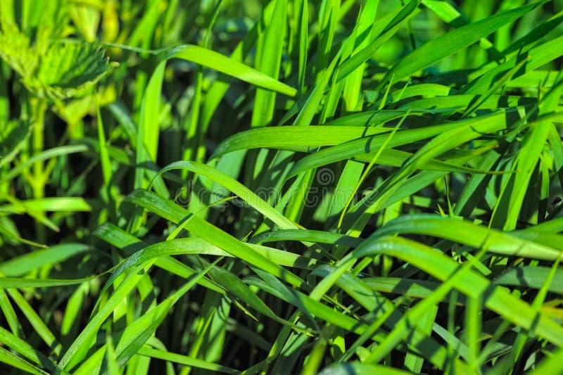 Dichtes Gras lizenzfreie stockfotos