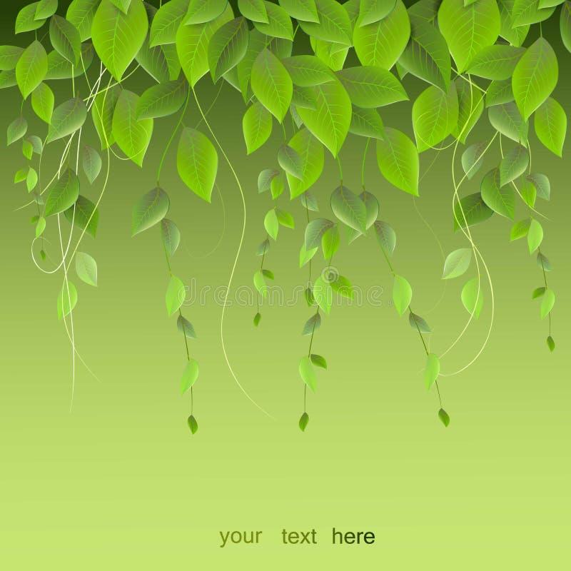 Dichtes Laub, das an einem grünen Hintergrund, Kletterpflanzen, VE hängt lizenzfreie abbildung
