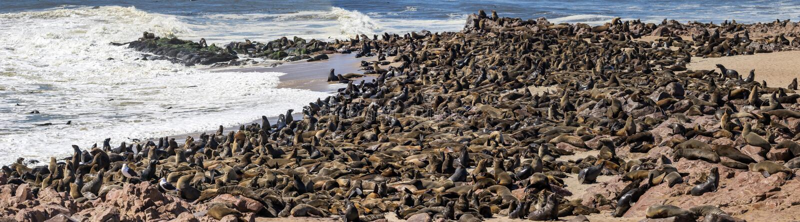 Dichtungen am Kapkreuz in Namibia lizenzfreie stockfotografie