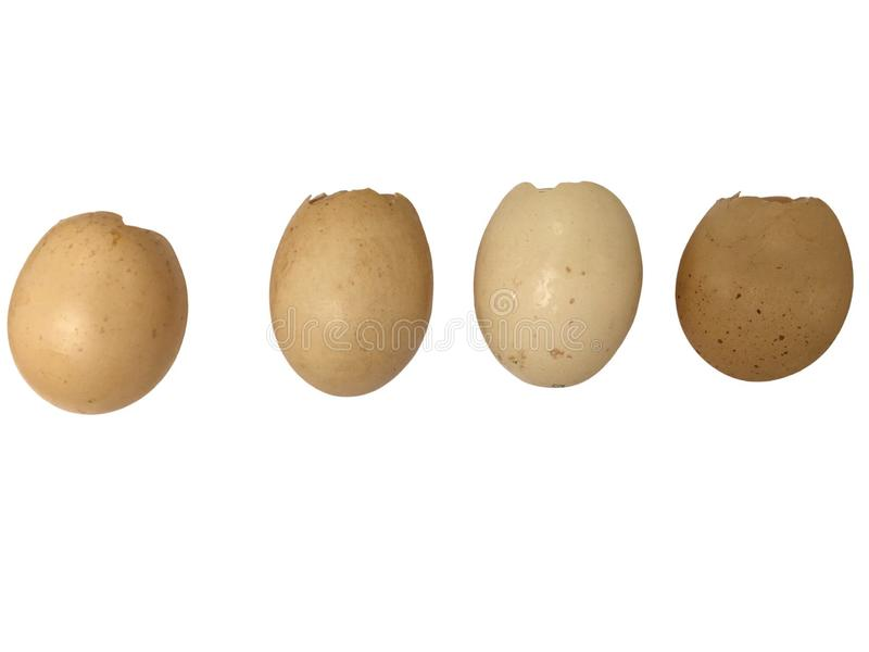 Dicut chicken egg shell , the evidence of hatchery royalty free stock images