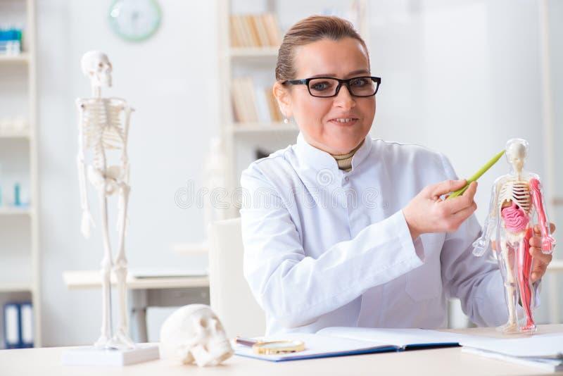 Die Ärztin, die menschliches Skelett studiert stockfoto