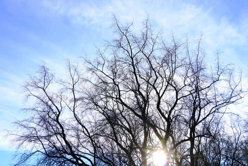 Die Überdachung von den hohen Bäumen, die einen klaren blauen Himmel gestalten, wenn die Sonne durch scheint stockbilder