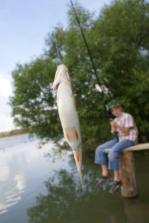 Die abgefangenen Fische lizenzfreie stockfotos