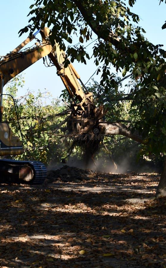 Die Abholzung des Waldbaggers verwendet, um Baumstümpfe und Wurzeln nach dem Wald oben zu graben wurde entfernt stockbilder