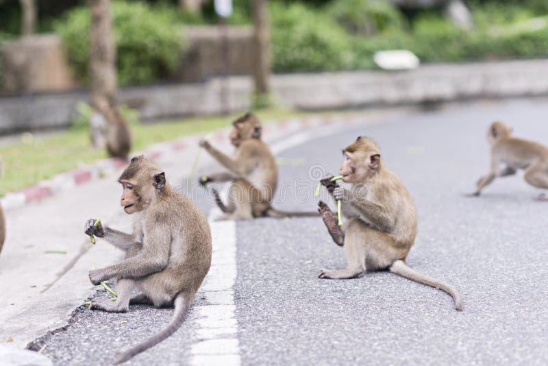 Die Affen essen lizenzfreies stockbild