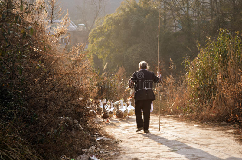 Die alte Dame in einer Ente lizenzfreies stockbild