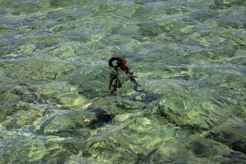 Die alte rostige Kette wird auf die Küste im klaren klaren wat geworfen stockbilder