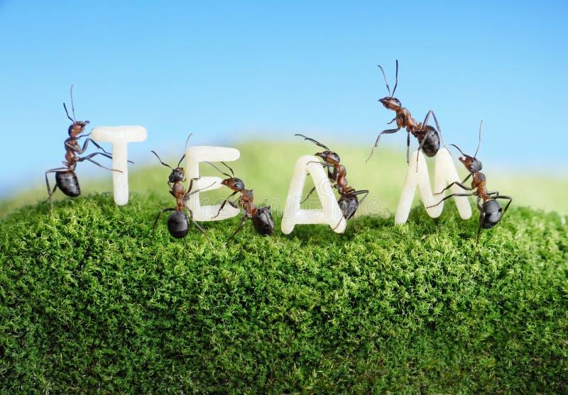 Die Ameisen, die Wort konstruieren, team mit Zeichen, Teamwork lizenzfreie stockbilder