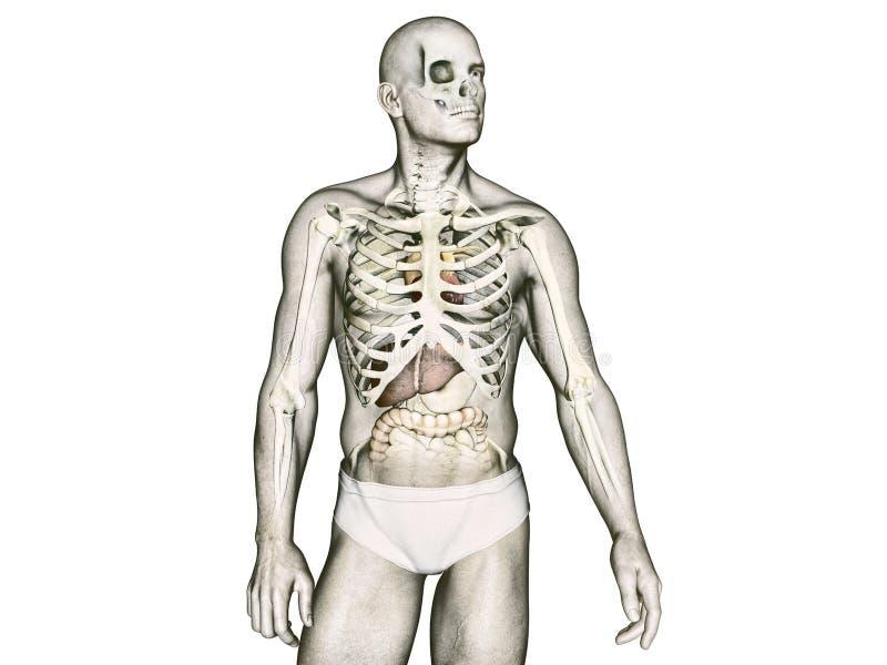 Groß Die Anatomie Des Körpers Fotos - Anatomie Ideen - finotti.info