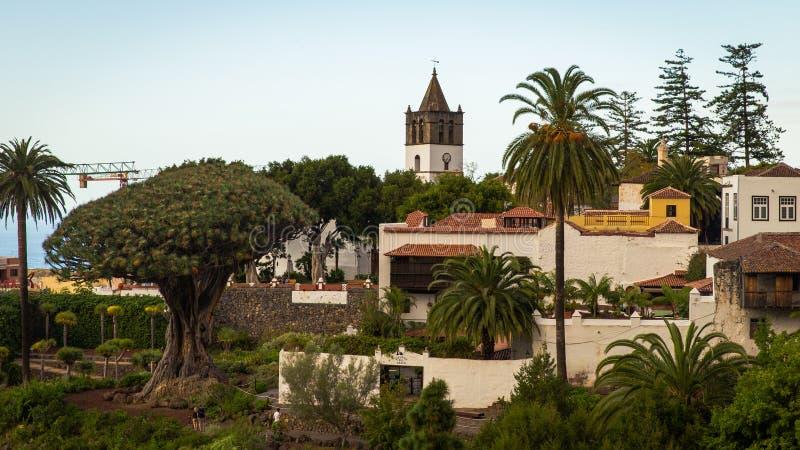 Die Ansicht über den Drachenbaum in Parque Del Drago in Teneriffa, Spanien lizenzfreies stockbild