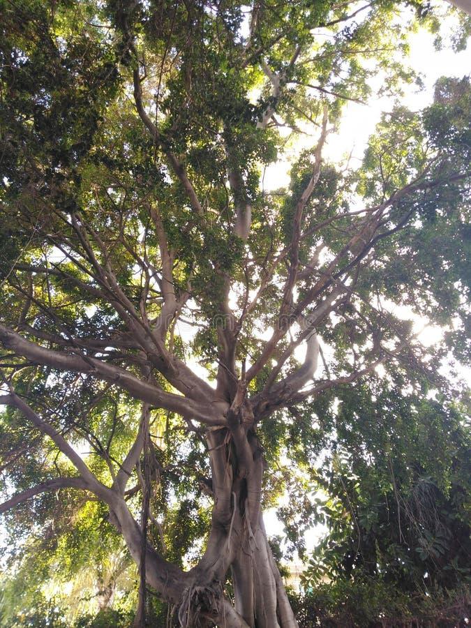 Die Ansicht von unterhalb eines Baums stockfoto