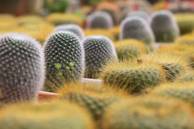 Die Anzeigensammlung von Miniaturkaktuspflanzen auf kleinen braunen Töpfen im botanischen Gewächshausgarten des minimalen Artdesi lizenzfreie stockfotos