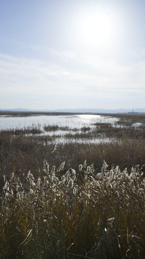 Die Art von Sibirien-Herbst lizenzfreies stockbild