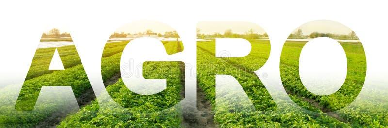 Die Aufschrift Landwirtschafts auf dem Hintergrund eines Kartoffelplantagenfeldes Agro-Industrie integrierte Lösungen, zum von Pr stockbilder